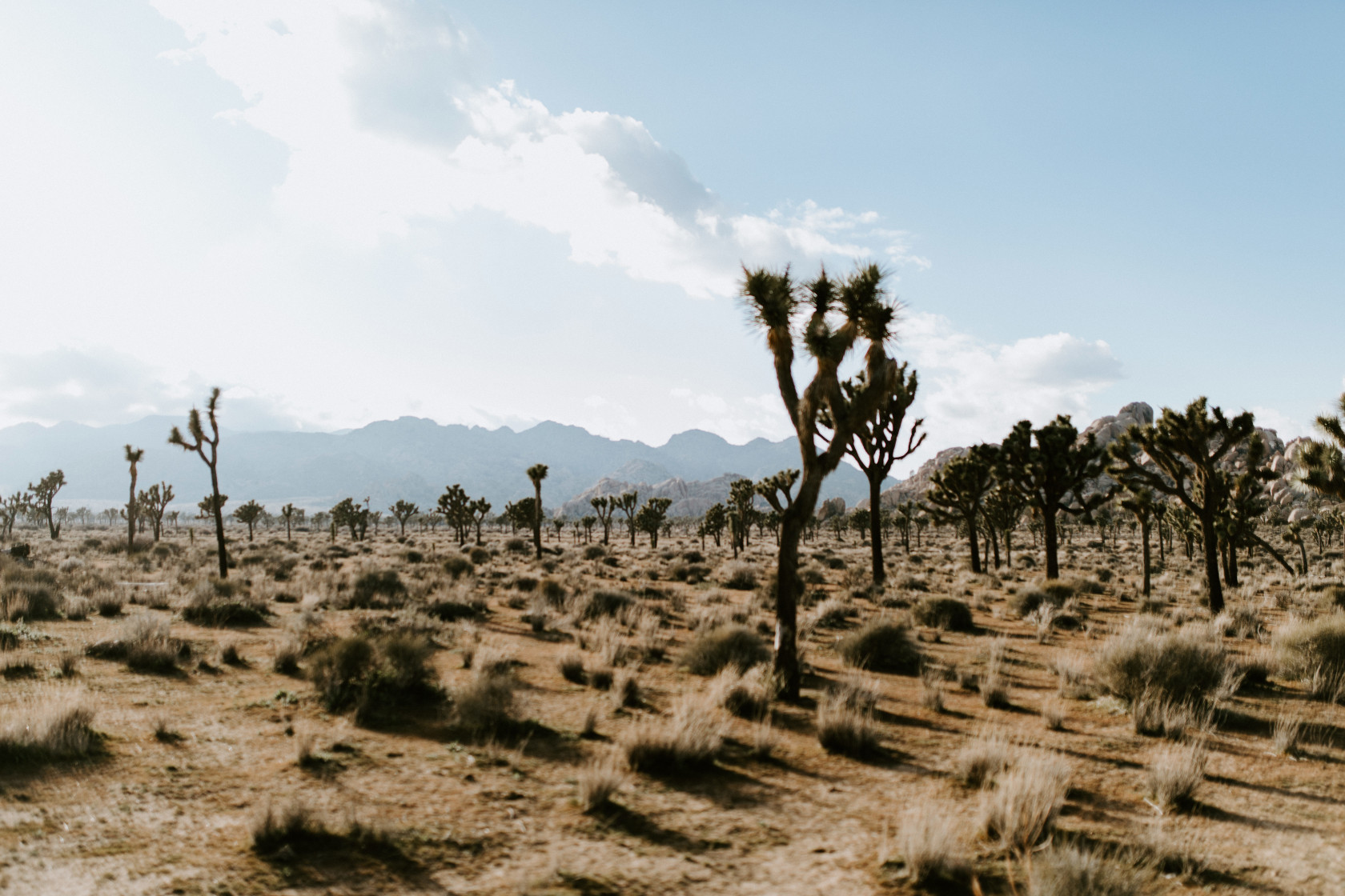 The view of Joshua Tree National Park, CA Elopement wedding photography at Joshua Tree National Park by Sienna Plus Josh.